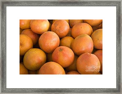 Texas Red Grapefruit Framed Print by Inga Spence