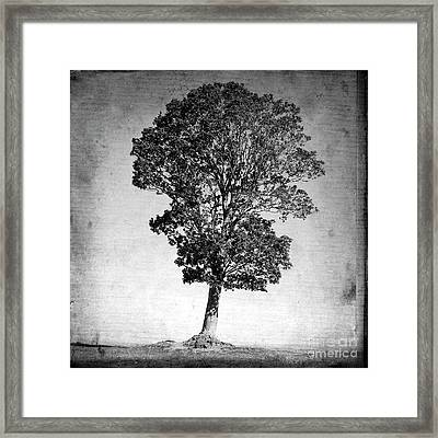 Textured Tree Framed Print by Bernard Jaubert
