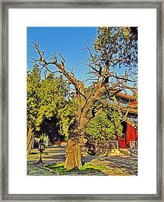 The Ancient Tree. Next To The Secret City. Framed Print by Andy Za