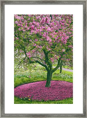 The Apple Doesn't Fall Far From The Tree Framed Print by Jessica Jenney