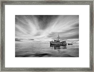 The Auklet  Framed Print