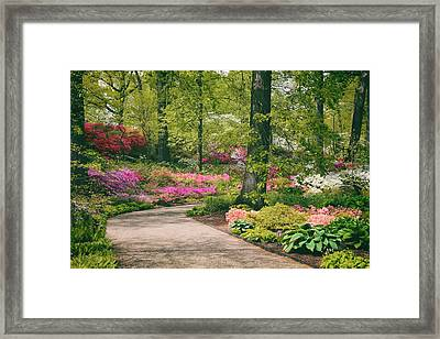 The Azalea Path Framed Print by Jessica Jenney