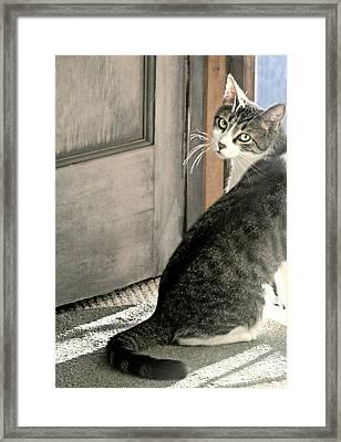 The Back Door Framed Print