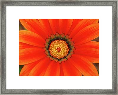 The Beauty Of Orange Framed Print by Lori Tambakis