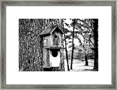 The Bird Feeder Framed Print