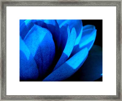 The Blue Lilly Framed Print by Catherine Natalia  Roche