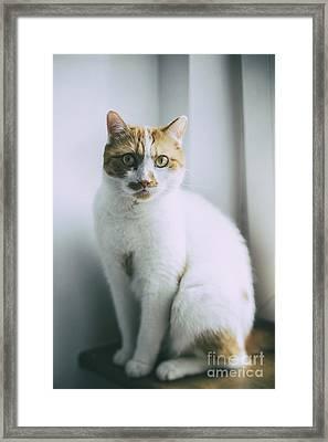 The Cat Framed Print