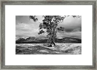 Framed Print featuring the photograph The Cazneaux Tree by Bill Robinson