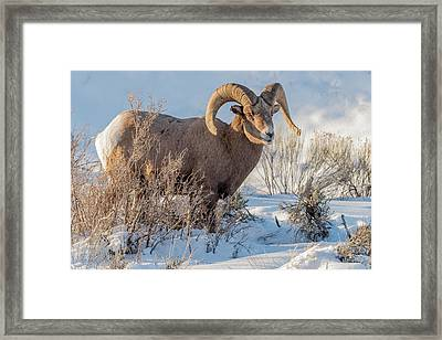 The Christmas Gift Framed Print