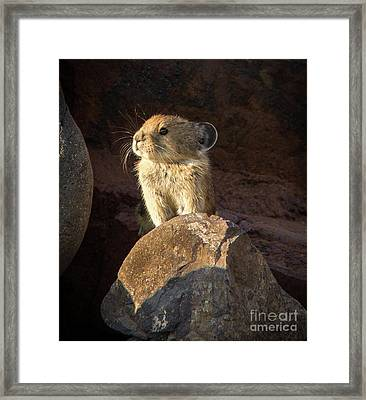 The Coast Is Clear Wildlife Photography By Kaylyn Franks Framed Print