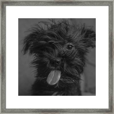 The Dog Tongue Is Speaking. Listen Framed Print