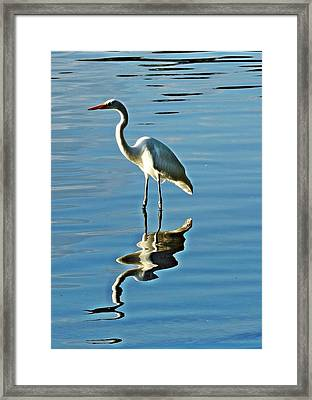 The Egret Framed Print