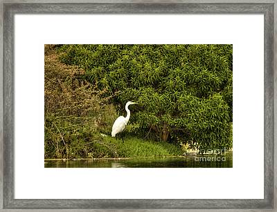 The Egret Framed Print by Marc Bittan