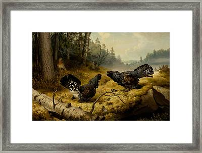 The Fighting Capercaillies Framed Print