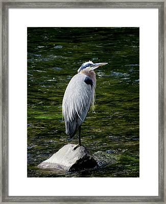 The Fisherman Framed Print