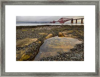 The Forth Bridges Framed Print by Nichola Denny