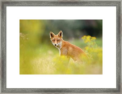 The Fox And The Flowers Framed Print by Roeselien Raimond