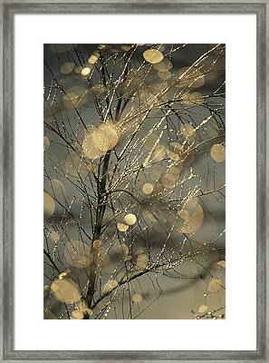 The Frozen Branches Of A Small Birch Framed Print by Raymond Gehman