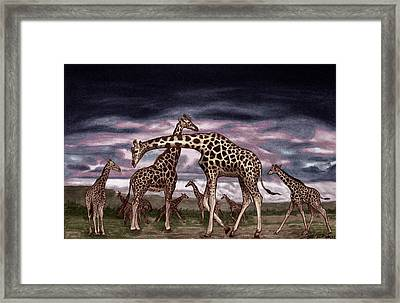 The Herd Framed Print by Peter Piatt