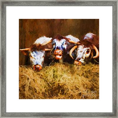 The Laughing Cow. Framed Print by ShabbyChic fine art Photography