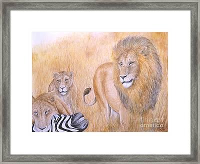 The Lion's Share Framed Print by Alan Shafer