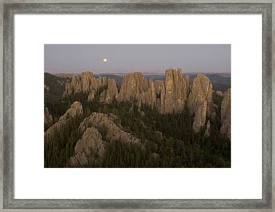 The Needles Protrude From Forests Framed Print by Phil Schermeister