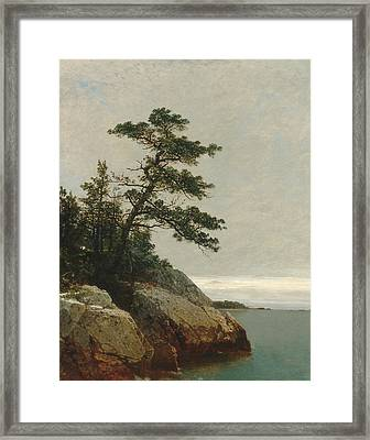 The Old Pine Darien Connecticut Framed Print