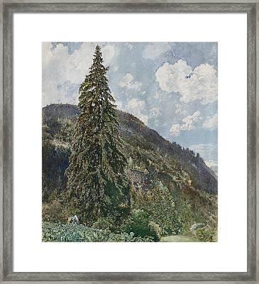 The Old Spruce In Bad Gastein Framed Print