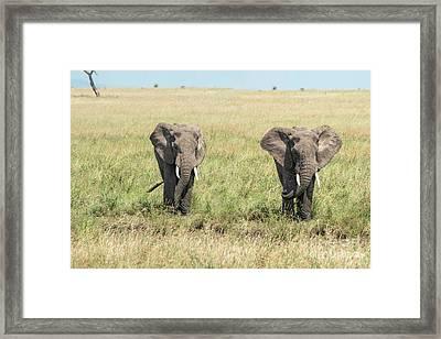 The Pair Framed Print