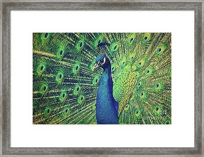 The Peacock Framed Print by Angela Doelling AD DESIGN Photo and PhotoArt