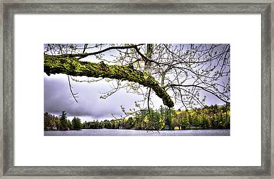 The Pond In Old Forge Framed Print by David Patterson