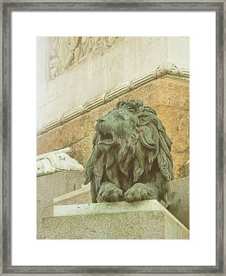 The Queens Lion Framed Print by JAMART Photography