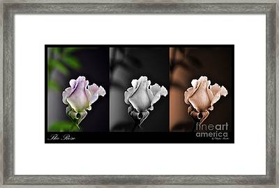 The Rose Framed Print by Clayton Bruster