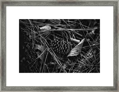 The Scent Of Pine Framed Print by Nancy Mathia