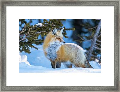 The Snow Beauty Framed Print