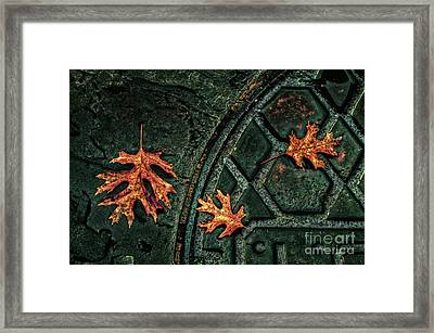 The Three Leaves Framed Print