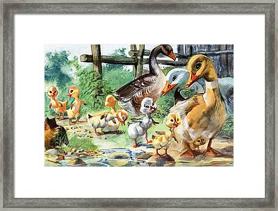 The Ugly Duckling Framed Print by English School