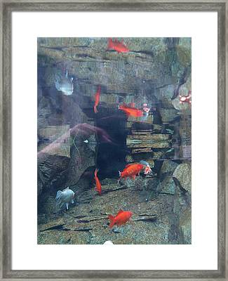 The Underside Framed Print by Jacob Stempky