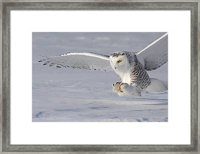 The White Hunter Framed Print by Mircea Costina