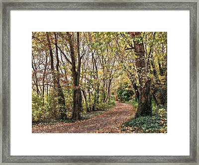 The Woods In Autumn Framed Print