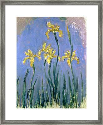 The Yellow Irises Framed Print by Claude Monet