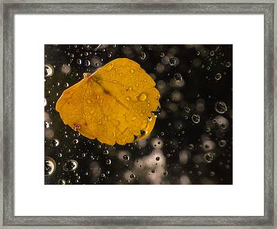 This One Followed Me Home... Framed Print