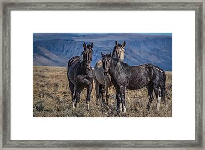 Three Amigo's Framed Print by Joe Hudspeth