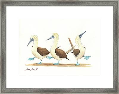 Three Blue Footed Boobies Framed Print by Juan Bosco