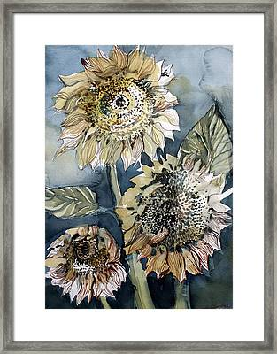 Three Sunflowers Framed Print by Mindy Newman
