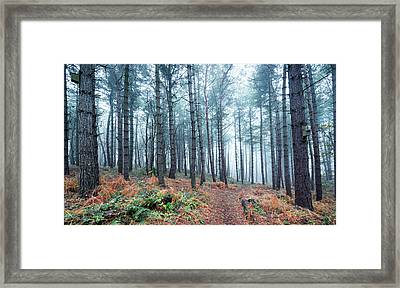 Through The Woods Framed Print by Svetlana Sewell