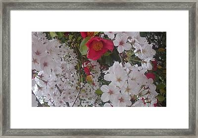 Thubaki Means Camellia Framed Print