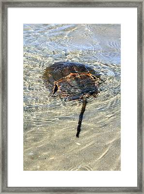 Tidepool Creature Framed Print by Mary Haber