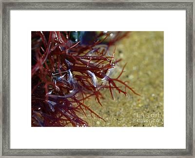 Tidepool Seaweed Framed Print