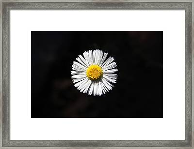 Framed Print featuring the photograph Tidy Fleabane by Charles Ables